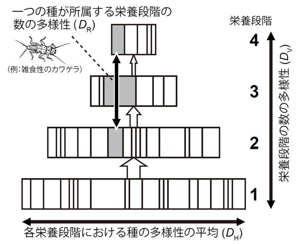 図1.解きほぐしがなされた後の食物網におけるD指標。四角は、それぞれの種のバイオマス(現存量)のうち、各栄養段階に分配された分量を示す。灰色の四角は、ある一つの種について分配されたバイオマスを示す。