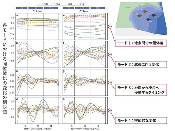 図3 脊椎骨椎体コラーゲンの炭素・窒素安定同位体比(δ13Cbulk、δ15Nbulk)を用いた非線形時系列解析から想定された、ヒラメの生活履歴の4つの主要なモード。