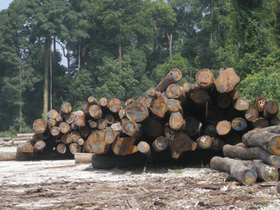 Logging of tropical rain forest in Malaysia