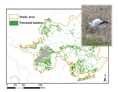 Figure 2 Map of the potential habitat of oriental white stork (green area) in central Japan.