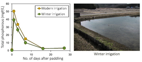 Figure 3 A lab experiment to compare temporal changes in total phosphorous concentrations in rice paddy waters after paddling (pre-planting field preparations) between modern and traditional winter irrigations. Phosphorous loading was significantly lower in the winter irrigation.