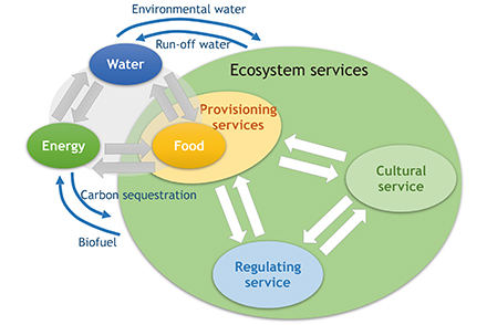 Nexus structure among water, energy, food, and ecosystem services
